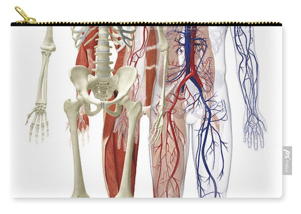Human Body Systems, Illustration Carry-all Pouch