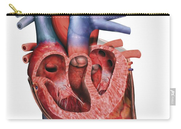 Human Heart In Cross-section Carry-all Pouch