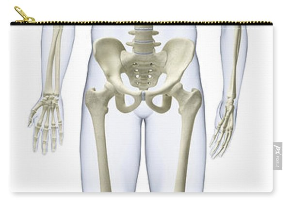 Human Skeleton, Illustration Carry-all Pouch