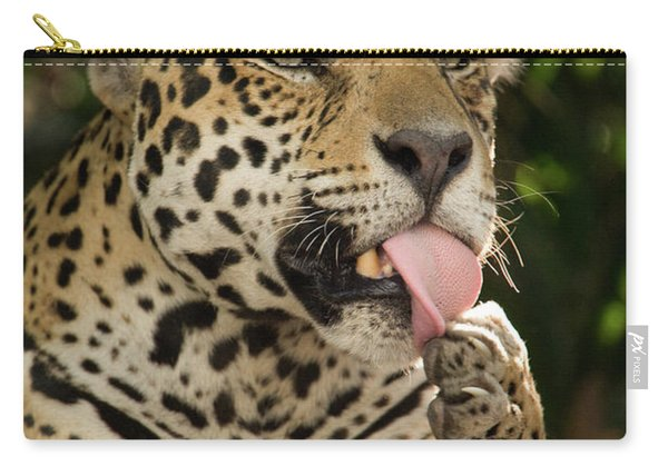 Jaguar Panthera Onca Licking Its Paw Carry-all Pouch