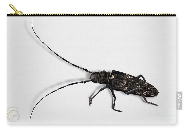 Long-hornded Wood Boring Beetle Monochamus Sartor - Coleoptere Monochame Tailleur - Carry-all Pouch