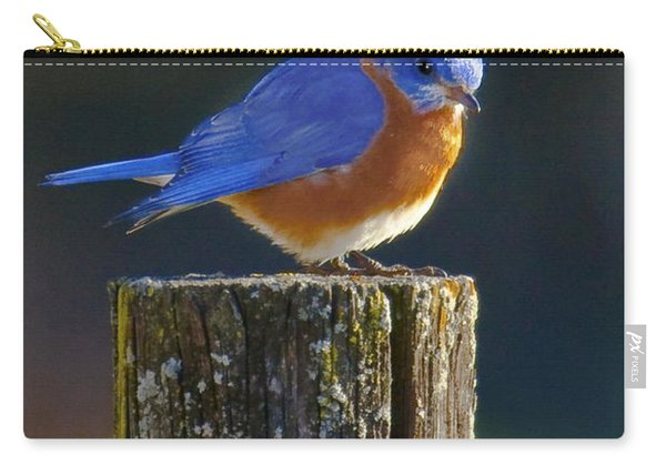 Male Bluebird Carry-all Pouch