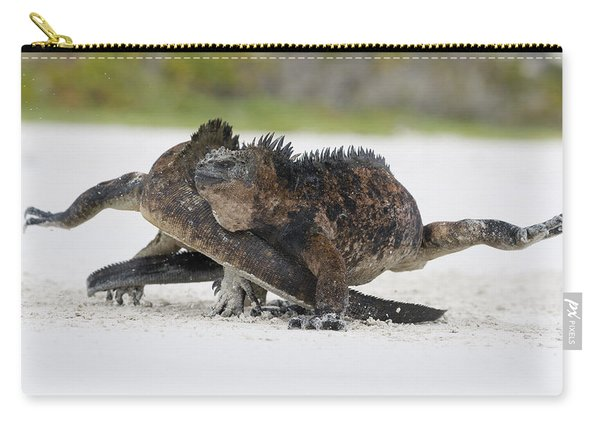 Marine Iguana Males Fighting Turtle Bay Carry-all Pouch