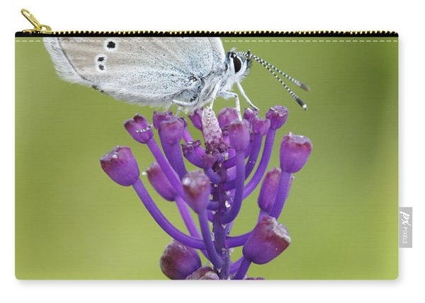 Mazarine Blue Butterfly Dordogne France Carry-all Pouch