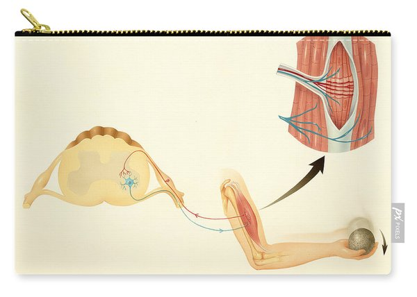 Motor Nerves And Stretch Reflex Carry-all Pouch