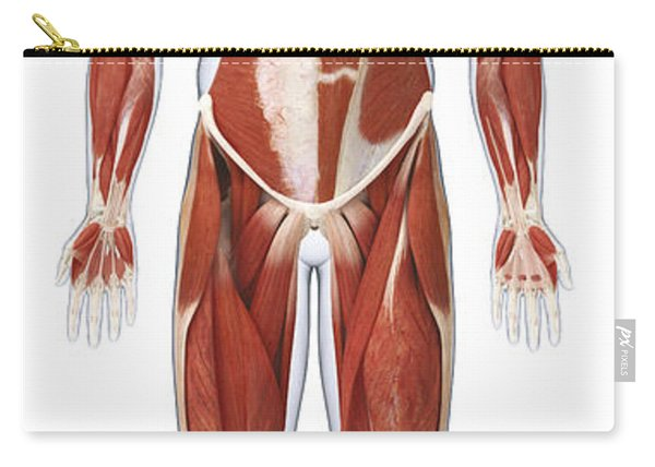Muscular System, Illustration Carry-all Pouch