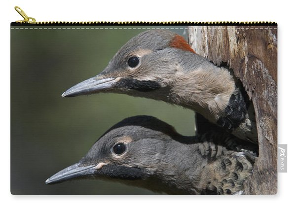 Northern Flicker Chicks In Nest Cavity Carry-all Pouch