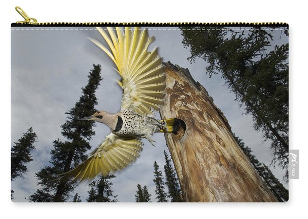 Northern Flicker Leaving Nest Cavity Carry-all Pouch