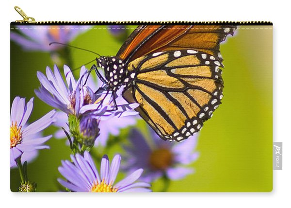 Carry-all Pouch featuring the photograph Old Butterfly On Aster Flower by Richard J Thompson