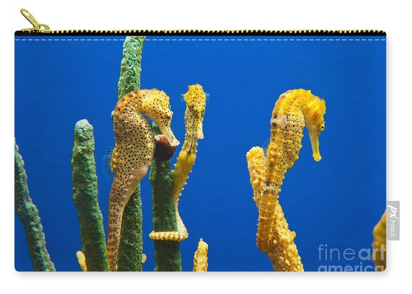 Pacific Seahorses Hippocampus Ingens Are Among The Giants Of Their World Carry-all Pouch