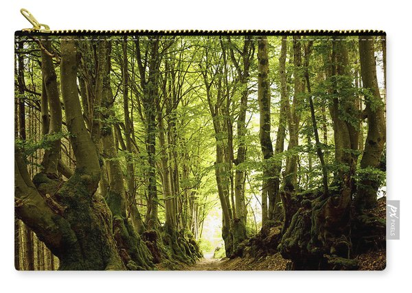 Path Lined Whit Old Beeches. Allier. Auvergne. France Carry-all Pouch