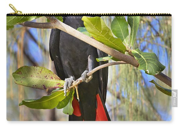 Red-tailed Black-cockatoo Queensland Carry-all Pouch