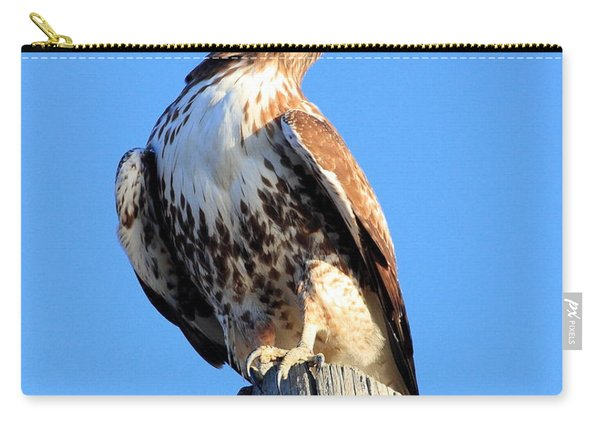 Red-tailed Hawk . 40d10167 Carry-all Pouch