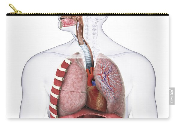 Respiratory System, Illustration Carry-all Pouch