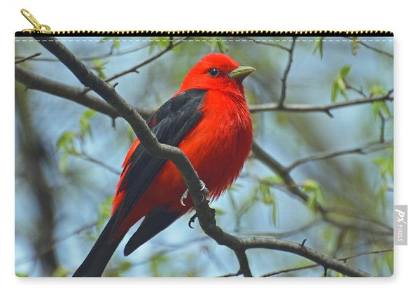 Scarlet Tanager In The Forest Carry-all Pouch