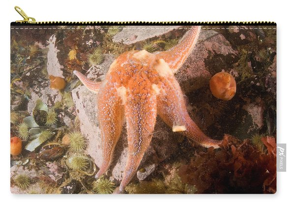 Seastar Releasing Eggs Carry-all Pouch
