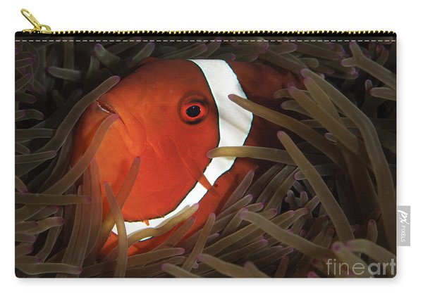 Spinecheek Anemonefish, Gorontalo Carry-all Pouch