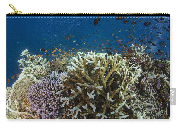 Staghorn Coral And Fish Koro Island Fiji Carry-all Pouch
