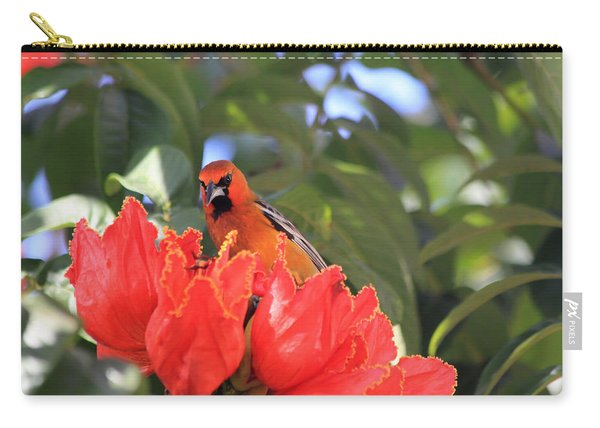 Streak-backed Oriole Carry-all Pouch