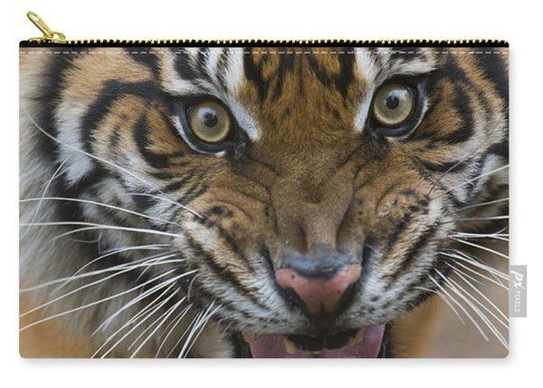 Sumatran Tiger Male Snarling Native Carry-all Pouch