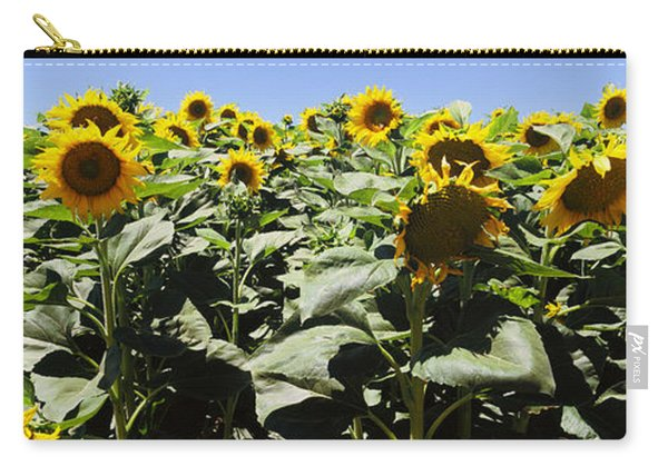 Sunflower Field, California, Usa Carry-all Pouch