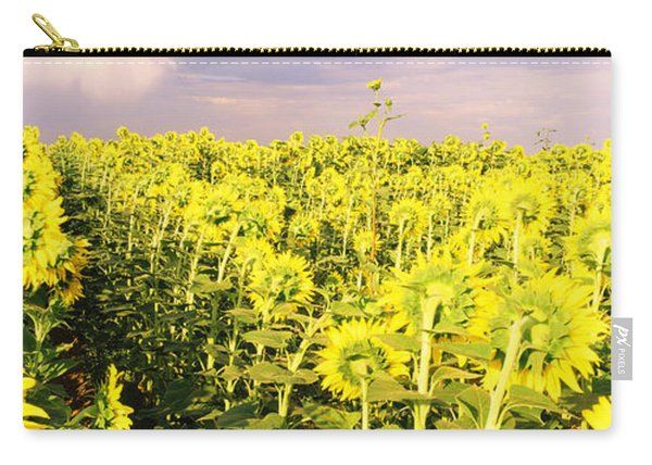 Sunflower Field, Colorado, Usa Carry-all Pouch