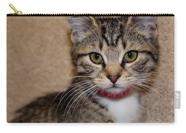 Tabby Baby Carry-all Pouch