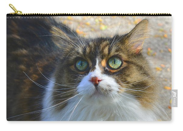 The Cat II Carry-all Pouch