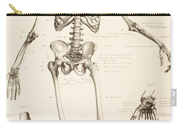 The Human Skeleton Carry-all Pouch