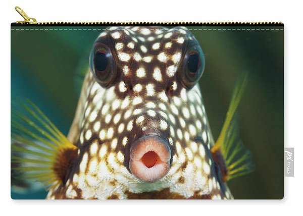 The Smooth Trunkfish  Lactophrys Carry-all Pouch
