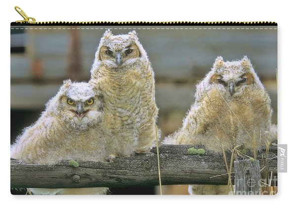 Three Great-horned Owl Chicks Carry-all Pouch
