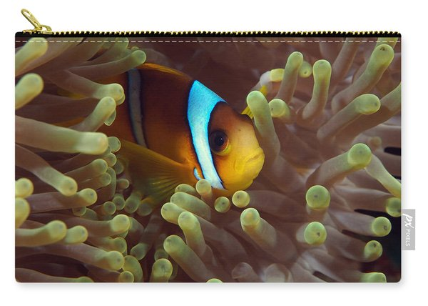 Two-banded Anemonefish Red Sea Egypt Carry-all Pouch