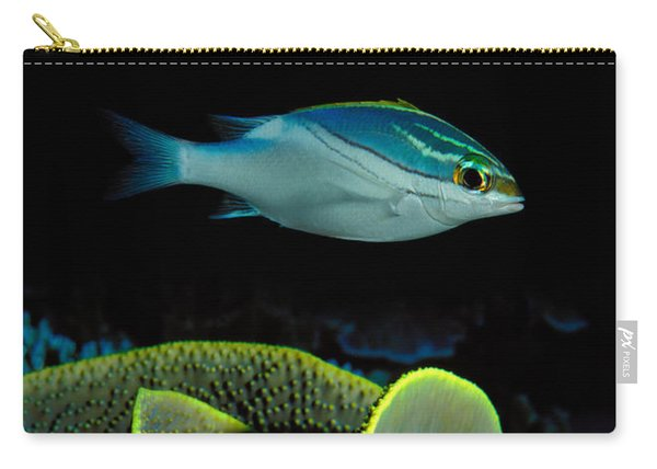 Two-lined Monocle Bream Scolopsis Carry-all Pouch