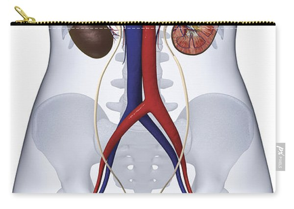 Urinary System, Illustration Carry-all Pouch
