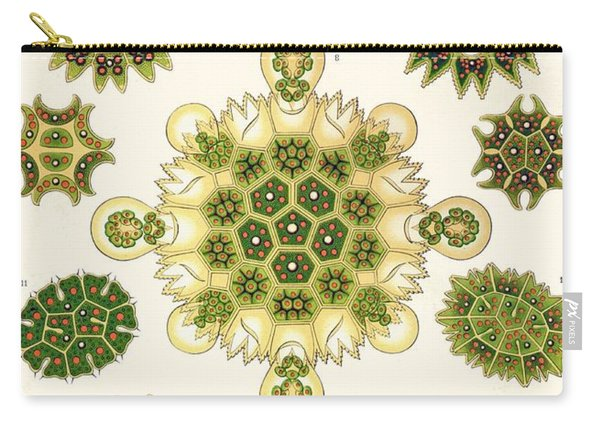 Varities Of Pediastrum From Kunstformen Der Natur Carry-all Pouch