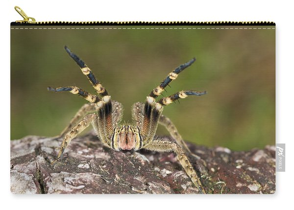 Wandering Spider In Defensive Posture Carry-all Pouch