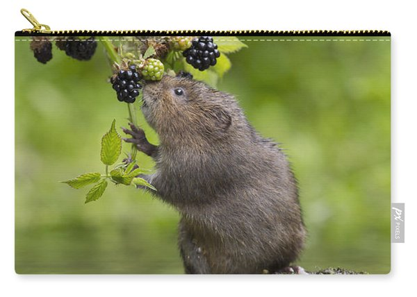 Water Vole Eating Blackberries Kent Uk Carry-all Pouch