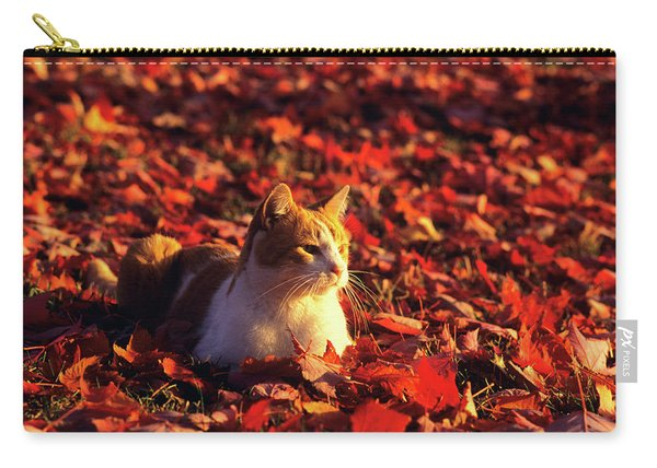 White Cat With Orange Tabby Markings Carry-all Pouch