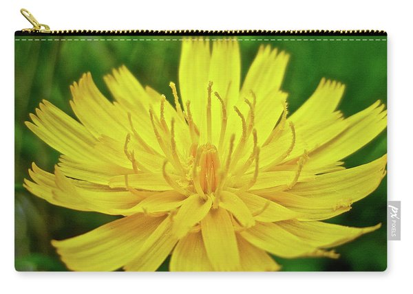 Yellow Hawkweed - Hieracium Caespitosum  Carry-all Pouch