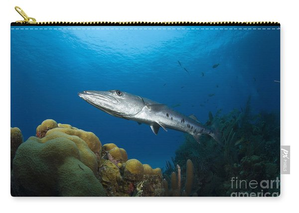 Great Barracuda, Belize Carry-all Pouch