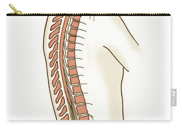 Illustration Of Spinal Nerves Carry-all Pouch
