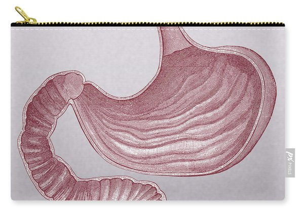 Stomach Carry-all Pouch