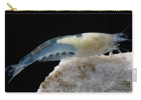 Taiji Cave Shrimp Carry-all Pouch