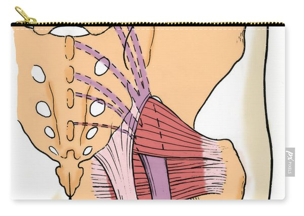 Illustration Of Human Pelvis Carry-all Pouch