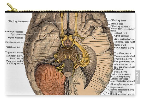 Undersurface Of The Brain Carry-all Pouch