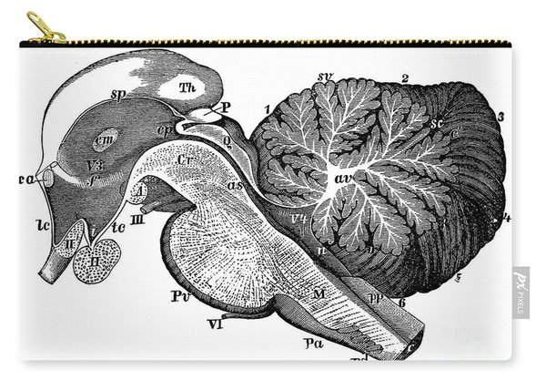 Third And Fourth Ventricles Of The Brain Carry-all Pouch