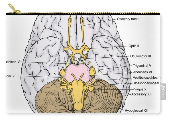 Illustration Of Cranial Nerves Carry-all Pouch