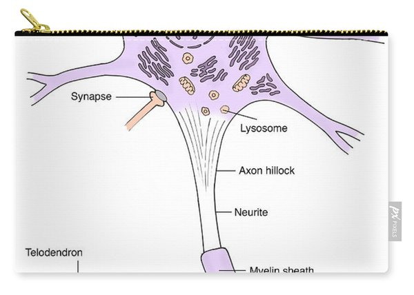 Illustration Of Motor Neuron Carry-all Pouch