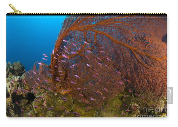 A Red Sea Fan With Purple Anthias Fish Carry-all Pouch