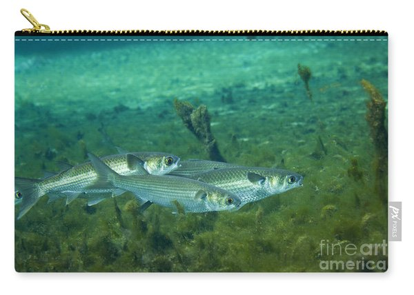 A School Of Striped Mullet Wim Carry-all Pouch